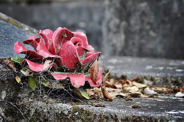 Eternal Blooms; Park Island Cemetery