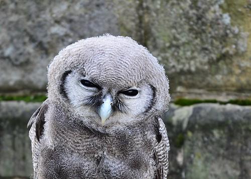 Owl 2 by birbee
