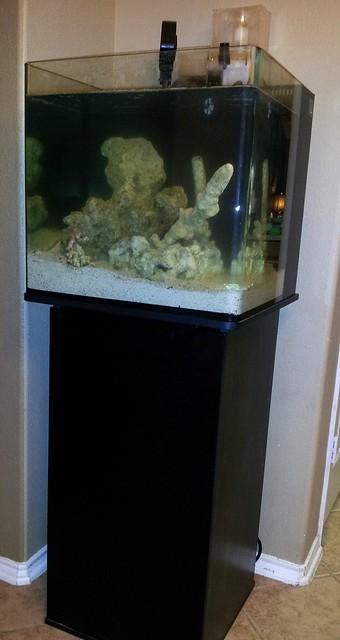 Im Micro Nuvo 30 Bta System Tank Builds Austin Reef Club