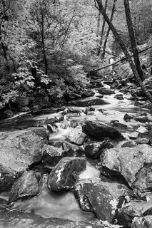 Grotto Falls Trail Streambed (B&W)