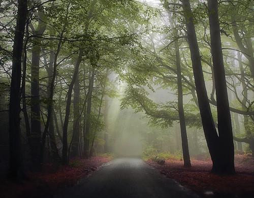 Mist the turn
