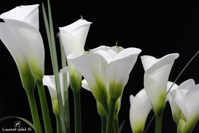 bouquet de fleurs d 39 ar me flickr photo sharing. Black Bedroom Furniture Sets. Home Design Ideas