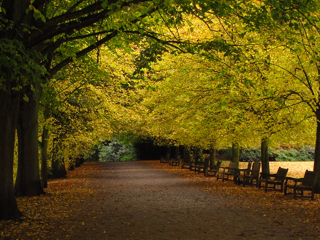 The Kenwood Lime Avenue