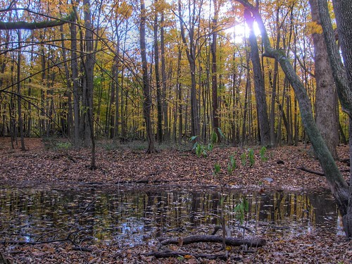 woods urbana hdr chdk