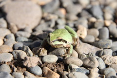 Wildlife - Amphibians and Reptiles