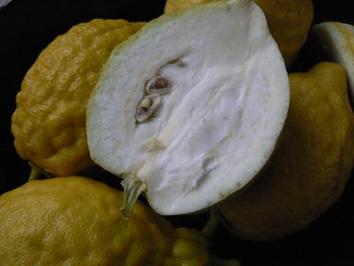 Etrog (Citron) by Ayala Moriel