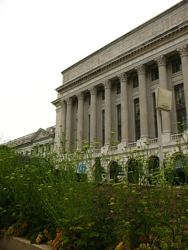 parsley in the flower beds in front of USDA