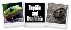 Reptilia and Amphibia