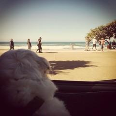 Gold Coast 440
