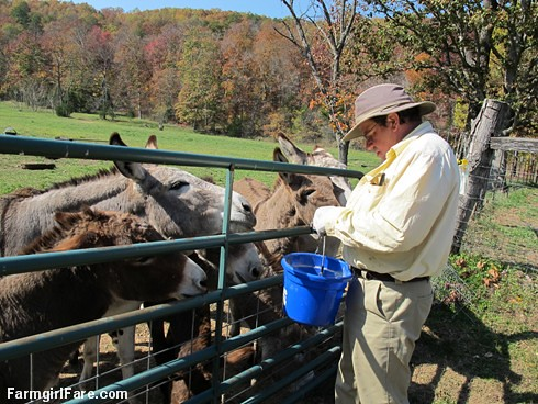 (24-5) Treat time for donkeys in the front field - FarmgirlFare.com