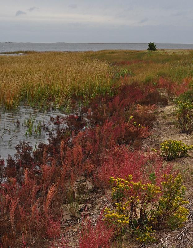 Metompkin Bay (11)