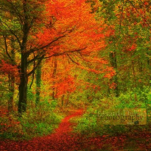 autumn kilkenny ireland fall nature landscape herbst eire otoño emeraldisle leinster autunna thegalaxy edwarddullardphotographykilkennycityireland flickrsfinestimages1