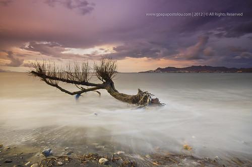 travel sunset sea sky seascape storm tree landscape aegeansea kosisland
