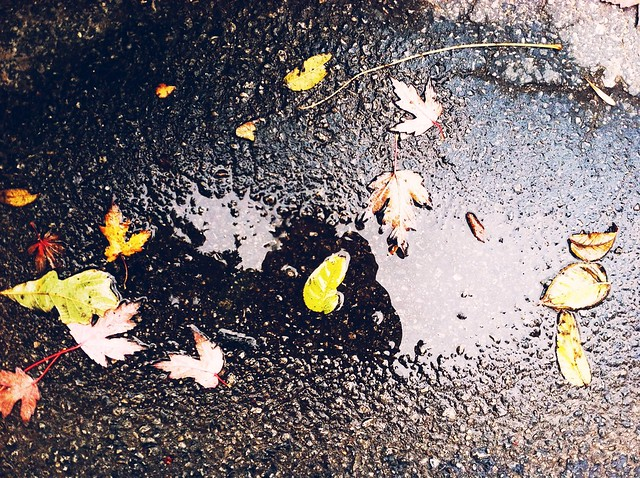 leaves, puddle, autumn, autumn rain, fall, Indiana autumn, leaves and pavement