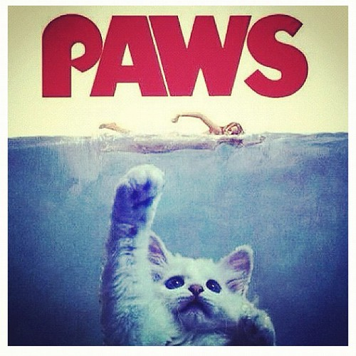 Getting scary on Halloween bro... #cats #halloween #jaws #paws #lol #mittromney