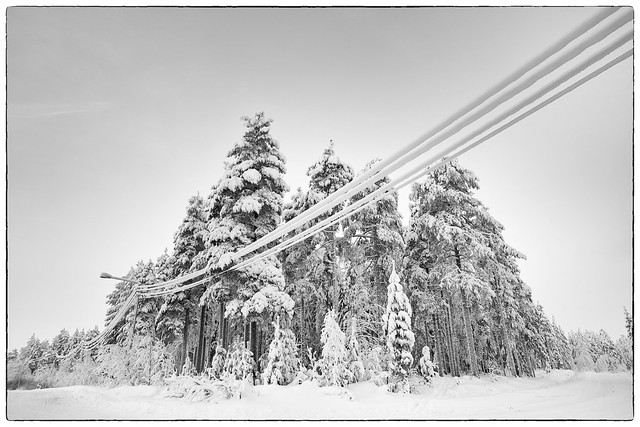 Snow-covered trees and cables