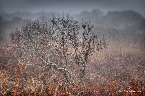 Tree in the Fog by Jerri Moon Cantone via I {heart} Rhody