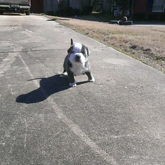 Mikeland's Young Scooter the being of the Swag Line #bully