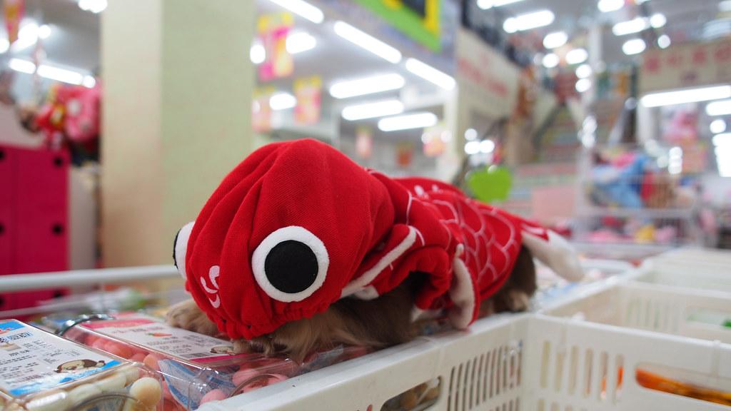 *外星魚?|哇喜BuBu!!