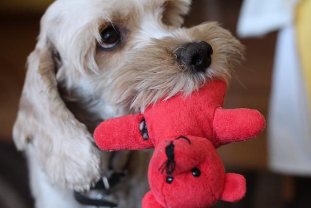 timmy y su mono rojo