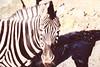 La Zebra