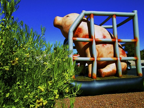2.4 - Sad Caged Giant Pig