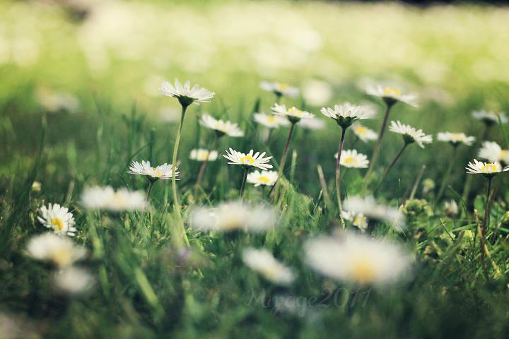 daisies, sehnsucht, geschenk