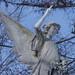 Anges - Cimetières Saint-Louis Trois-Rivières