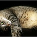 Small photo of Chillax Cat