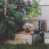#nempls #minneapolis #minnesota #dogs