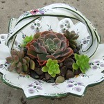 succulent candy dish 004