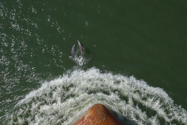 Dolphins and Ship Bow, Oct '12
