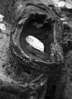 Hollow and Leaf (B&W)