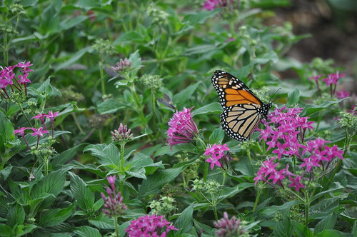 Dallas Arboretum 10-13-12 (24)
