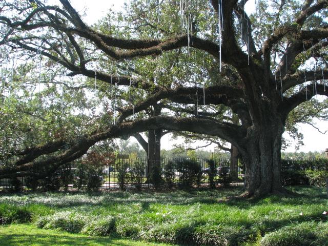 New Orleans Botanical Garden Flickr Photo Sharing