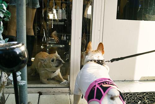 Signage dog & BLiNc!
