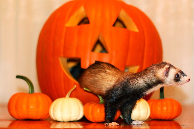 Halloween App
