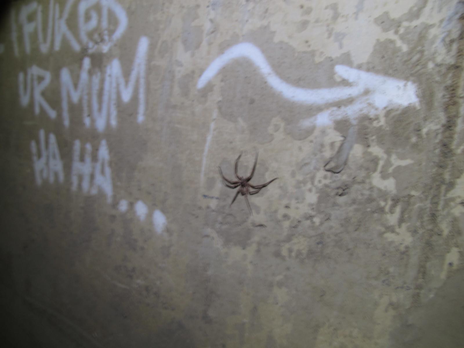 Spider?
