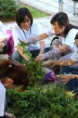 志工們將眼前這堆像小山般高的小花蔓澤蘭葉子一一拔下,準備將其打成 小花蔓澤蘭汁,浸染手帕。