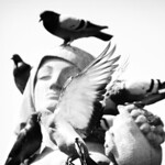 Joshua-Levinson-Nature -- Barcelona, Spain. A city of history, art, and pigeons - Joshua Levinson