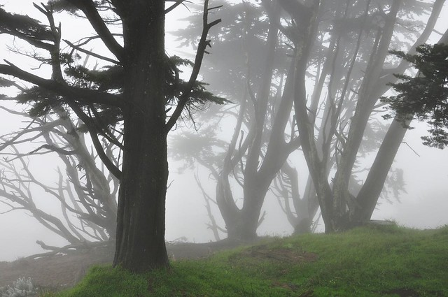 Ghostly trees