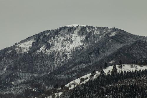 winter mountain snow forest germany landscape baden schwarzwald blackforest badenwuerttemberg belchen muenstertal