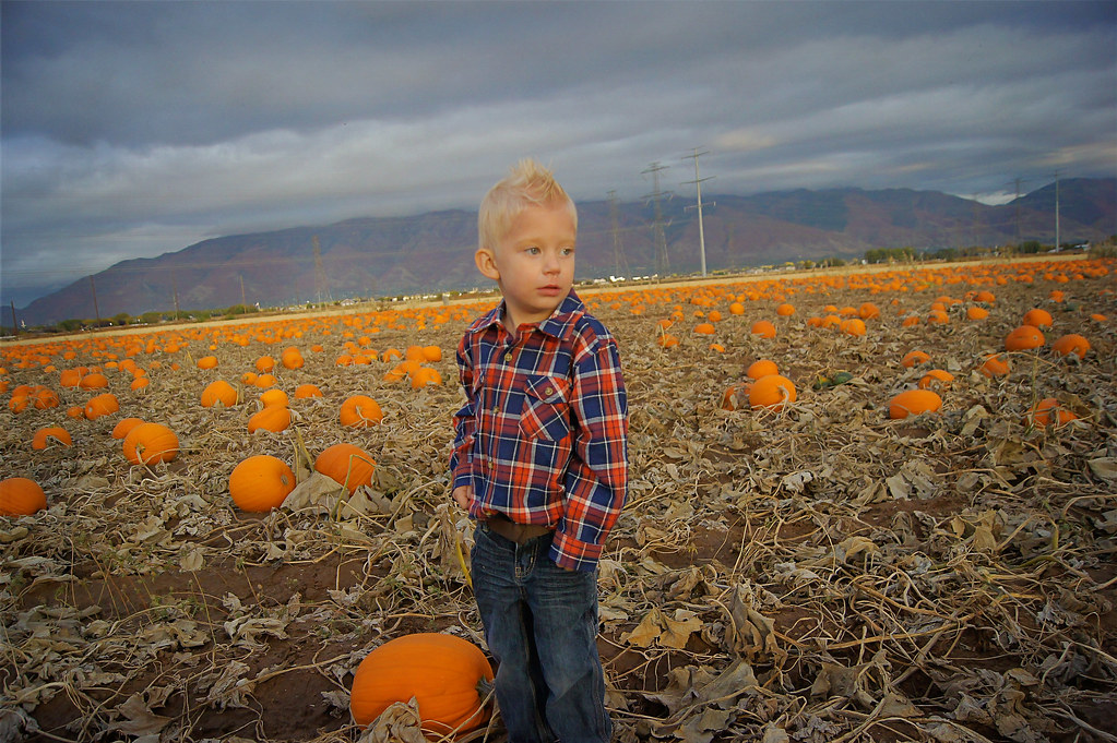 2012pumpkinpatch12