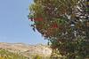 Kreta 2009-1 308