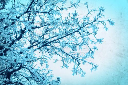 winter snow texture ice canon romania canonef2470mmf28lusm muntenia canoneos50d canon50d bragadiru ilfov