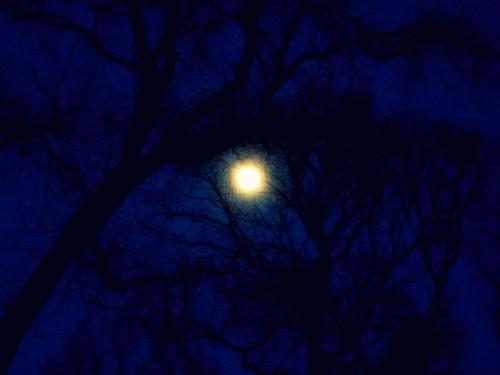 Moonlight V2.0