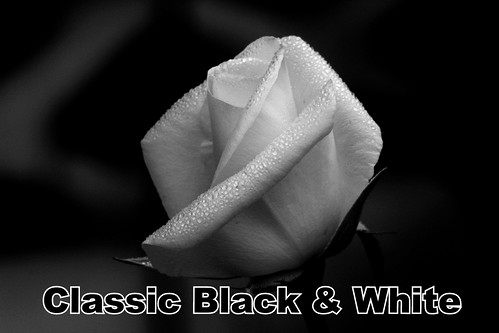 Classic Black & White Group