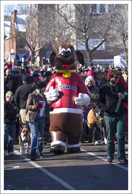 Soulard Pet Parade 2013-02-03 8