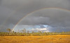 A nice view after short rain in the bog in September