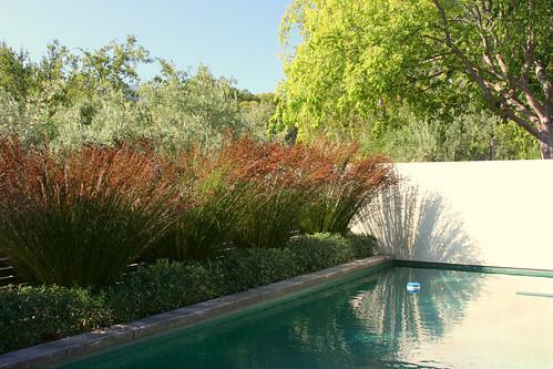 pool plantings